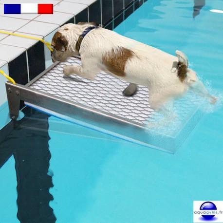 Rampe animaux antinoyade de piscine